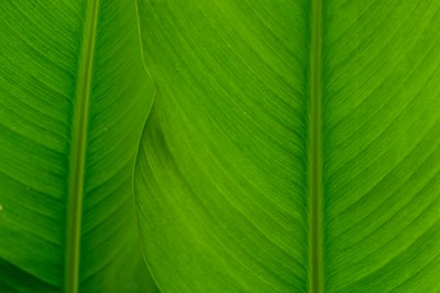 How to Treat Skin Conditions with Green Scrubs